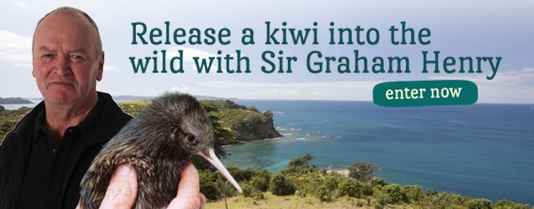 Graham Henry Kiwi
